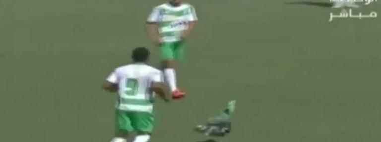 ინდაურმა ფეხბურთელებს თამაშში ხელი შეუშალა (ვიდეო)