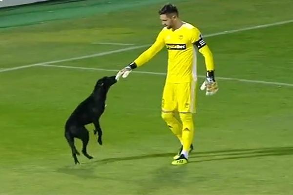"""""""დილა"""" – """"ტორპედოს"""" მატჩისას მოედანზე ძაღლი შევიდა (ვიდეო)"""